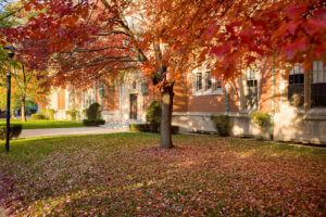 Autumn leaves in front of Berchmans Hall.